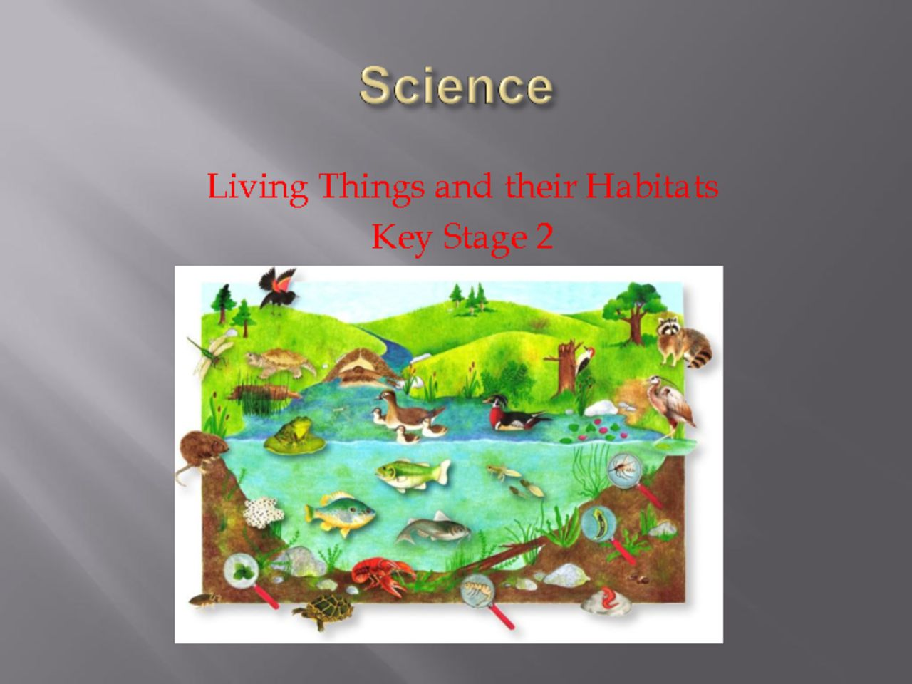 thumbnail of Science Key Stage 2 Habitats April 2020